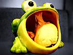 frogburn959